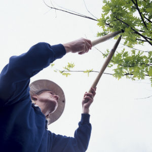 Answering Service for Tree Trimming Service
